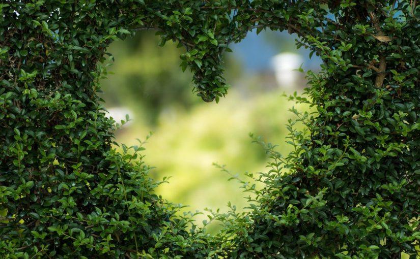 Piękny ,a także ładny ogród to zasługa wielu godzin spędzonych  w jego zaciszu w toku pielegnacji.